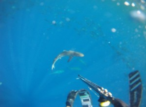 cobia spearfishing on a charter in louisiana