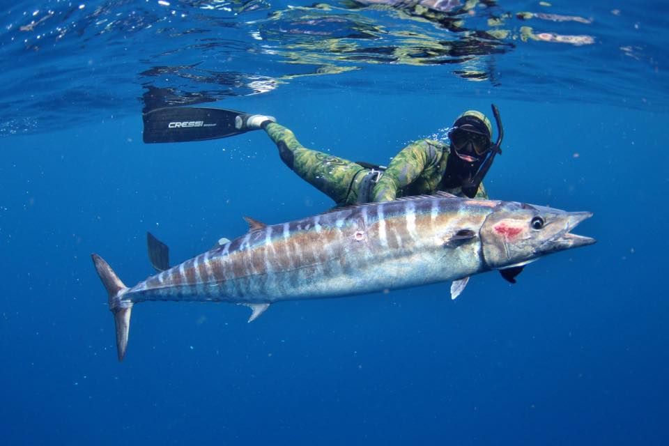fresh catch spotlight wahoo home run fishing charters