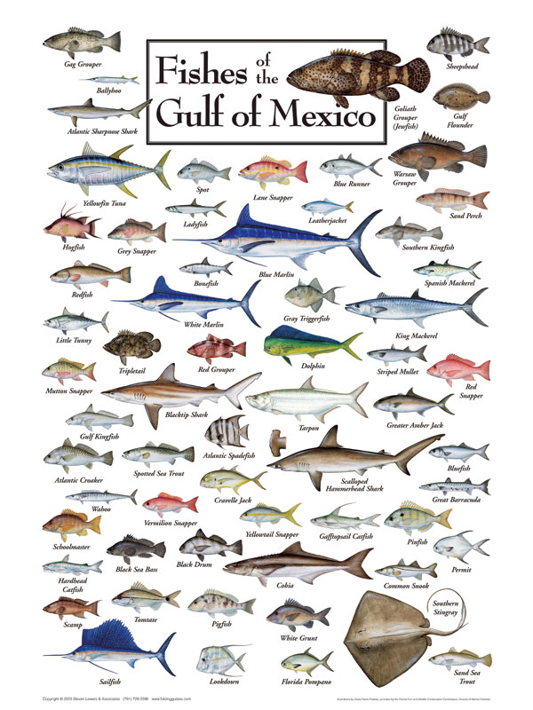 gulf of mexico infographic